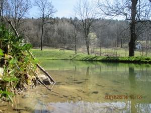revitalizace rybníka