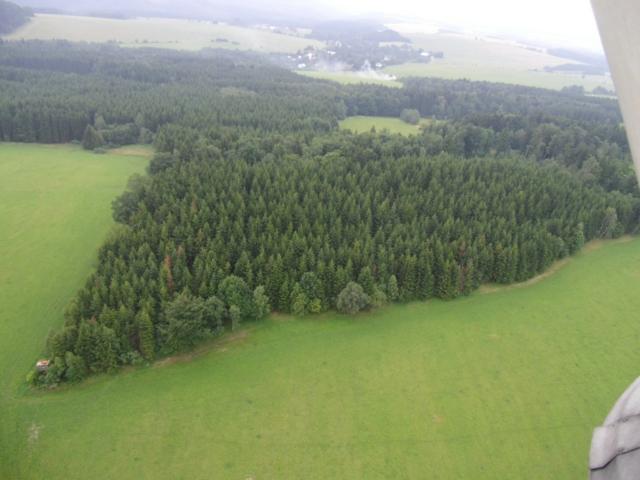 Grafika-původní stav lesa