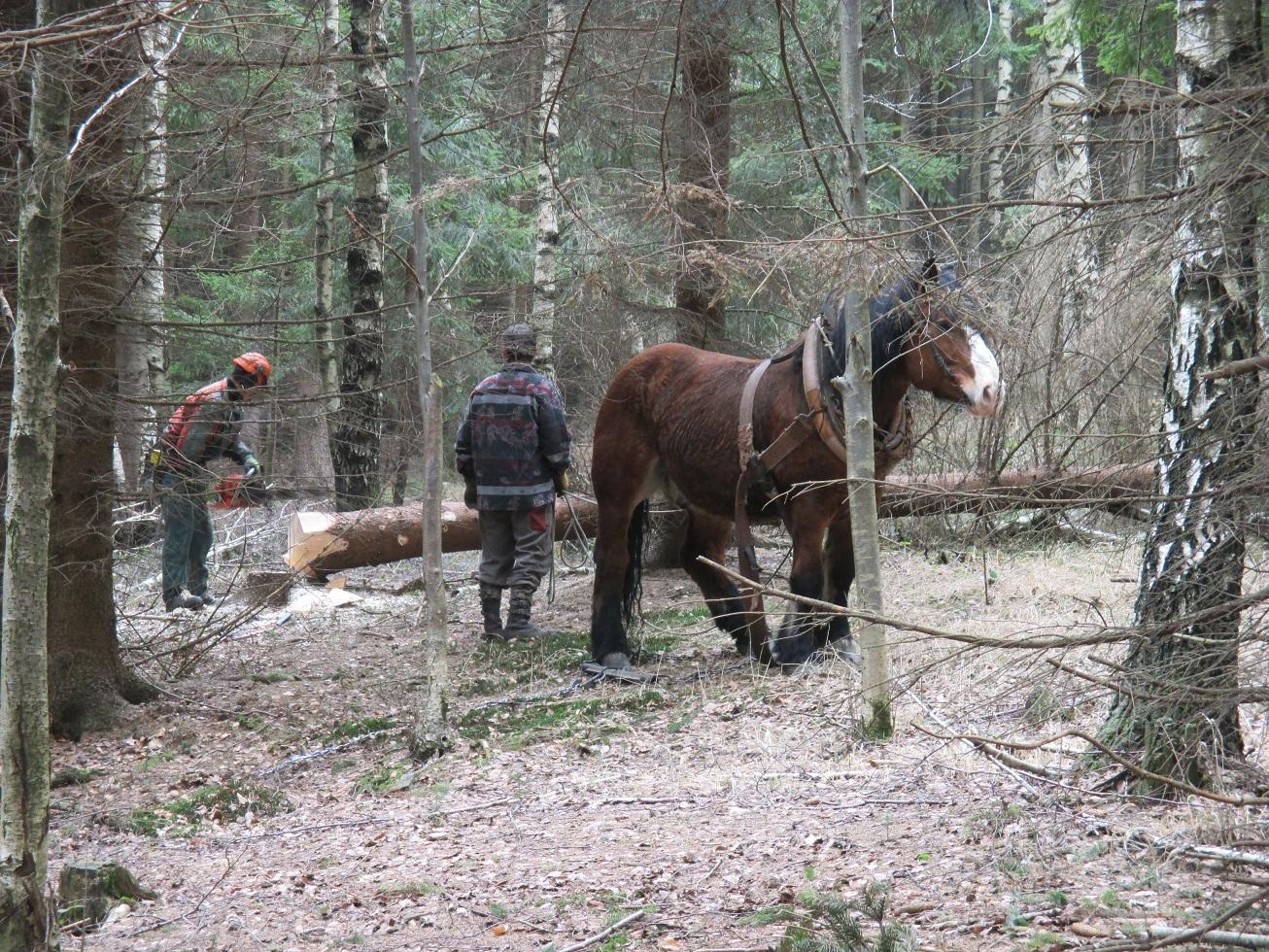 Grafika-těžba koněm