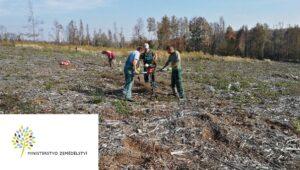 Dotace ministerstva zemědělství na hospodaření v lesích