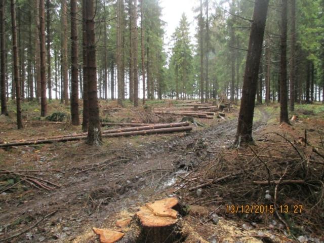 Grafika-tahání dřeva